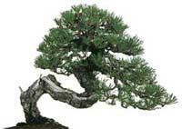 Fontane for Giardini giapponesi milano