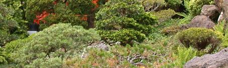 Giardinaggio insetti dannosi al giardino cocciniglia for Acquisto piante ulivo