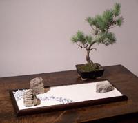 Vendita prodotti giapponesi giardini zen da tavolo for Dove comprare giardino zen da tavolo