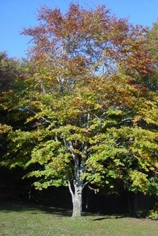 Come piantare un albero la guida pratica for Piantare un giardino