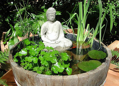 Piante acquatiche quali e come coltivarle nel laghetto for Laghetti nei giardini