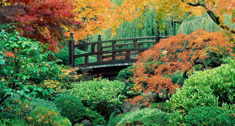 Giardino giapponese progettazione realizzazione giardini for Giardini zen giapponesi