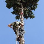 potature in tree climbing